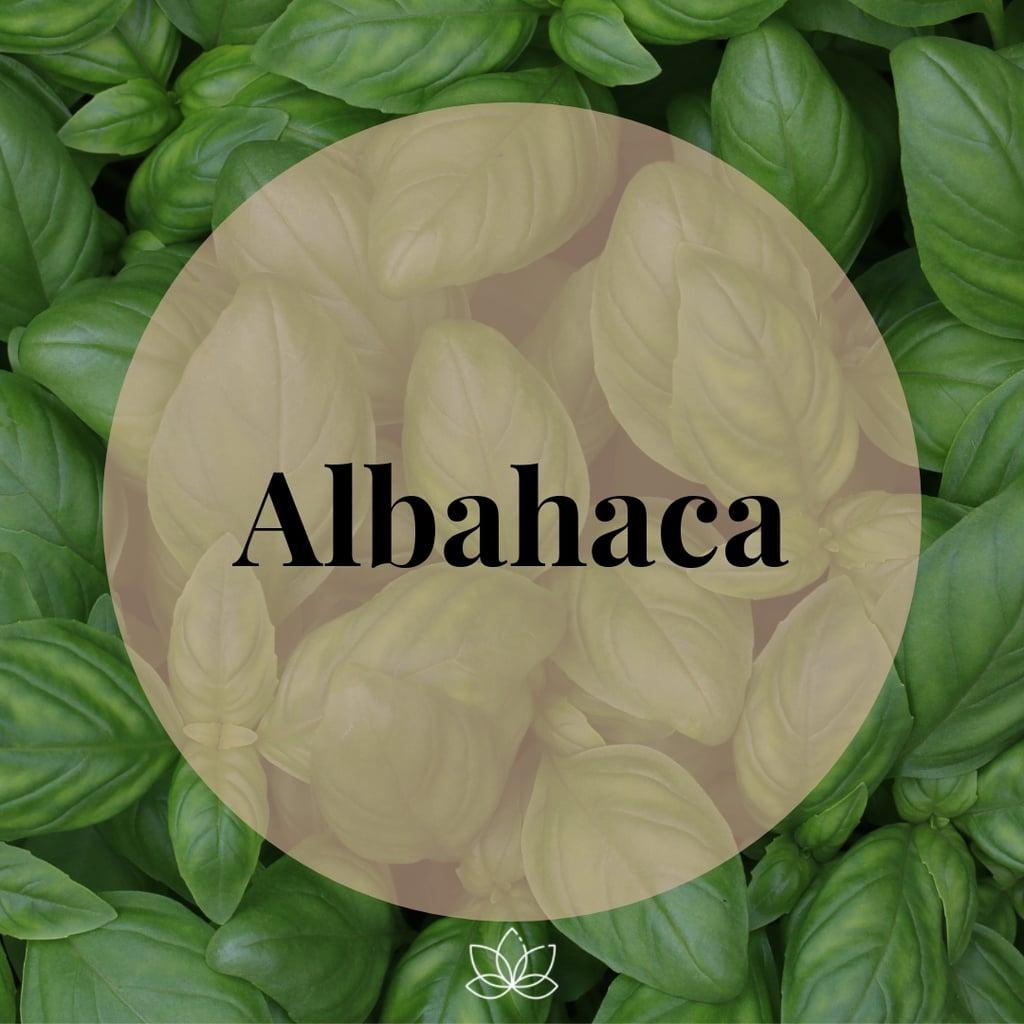 albahaca fresca: especia básica para comenzar a cocinar