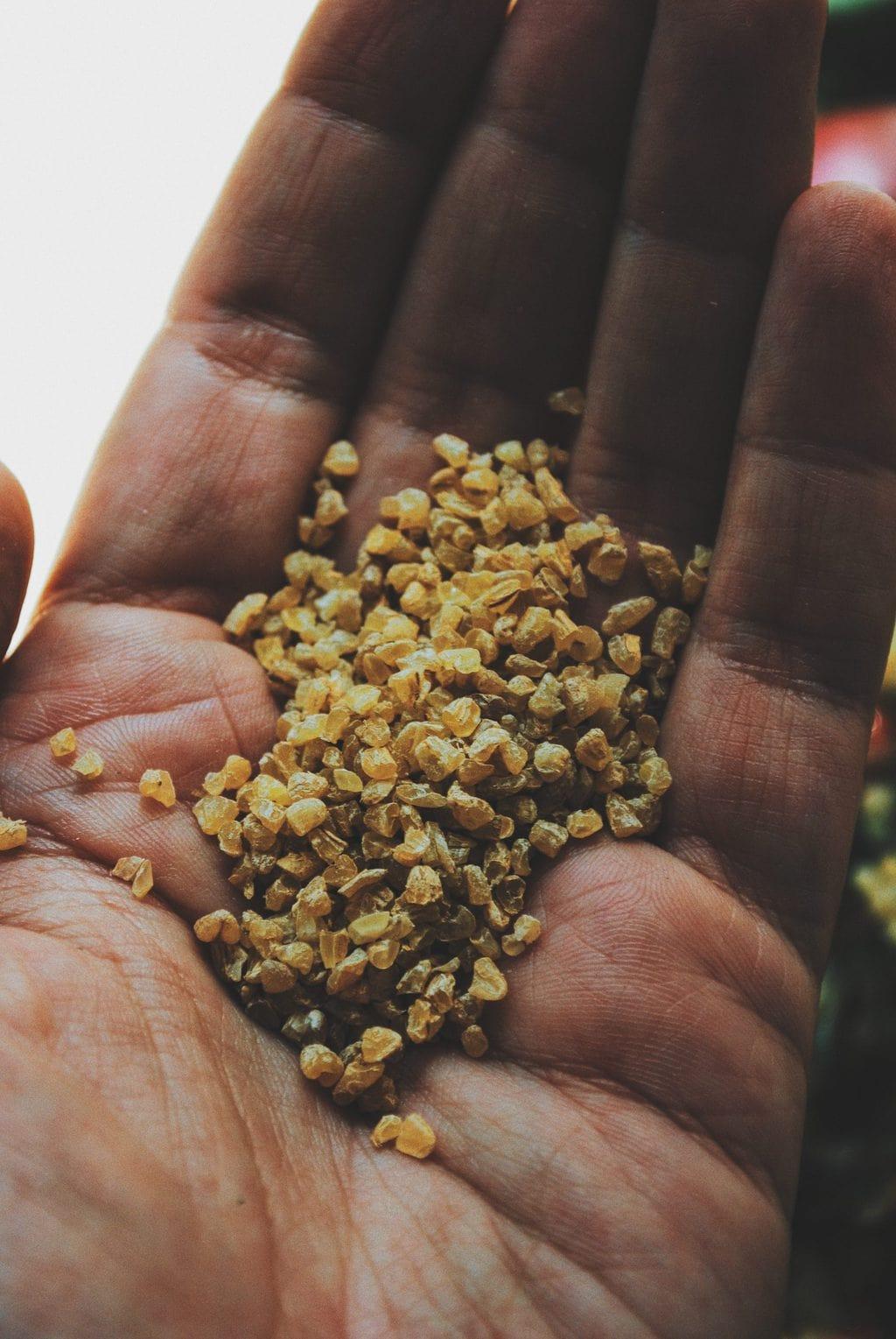 mano sosteniendo granos de bulgur